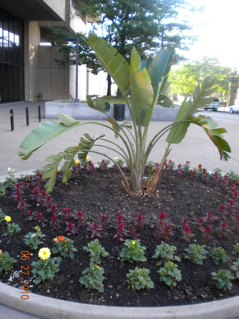 Flower bed Forbes at Law School 5.27.10